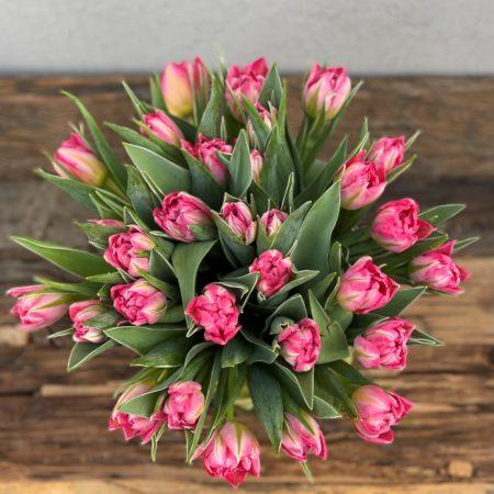 Rosa doble tulipaner